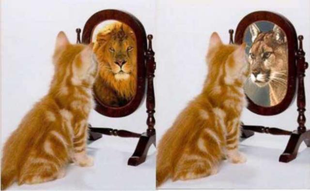 É carnaval de gatos e lebres...