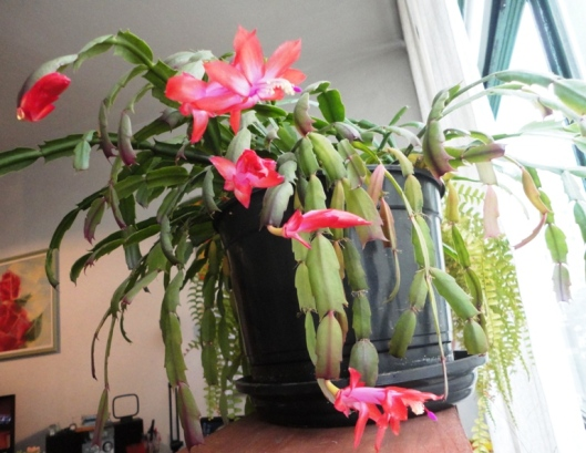 Flores de Maio. Valdo Resende